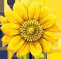 Adonis Blume, das Logo der Heilpraktikerschule Isolde Richter